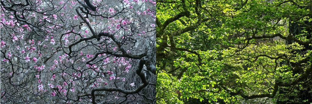 Botanic Gardens: Winter vs Summer
