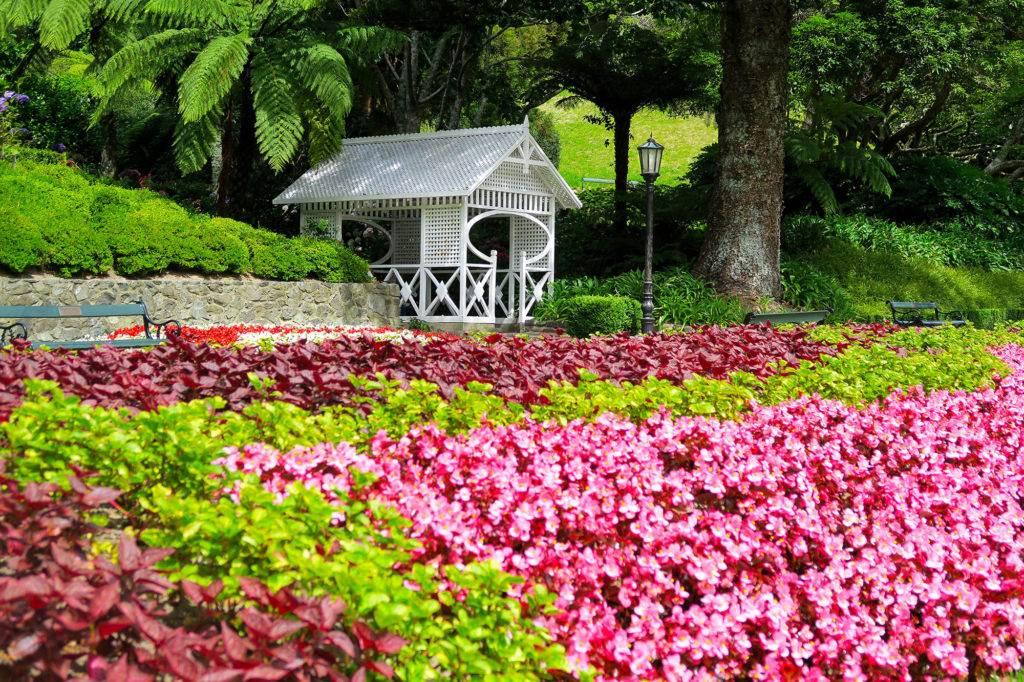 Colourful flower carpet at Wellington Botanic Gardens