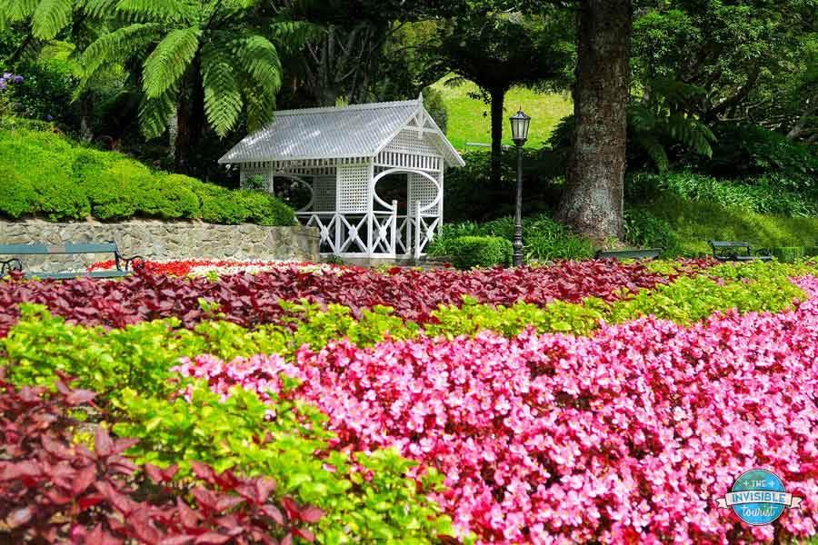 Vibrant garden beds