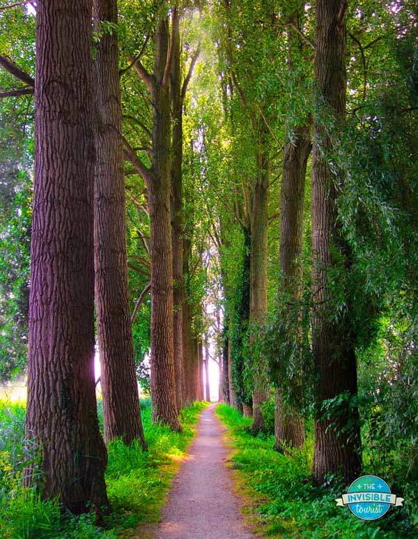 Poplar Tree Tunnel, Damme