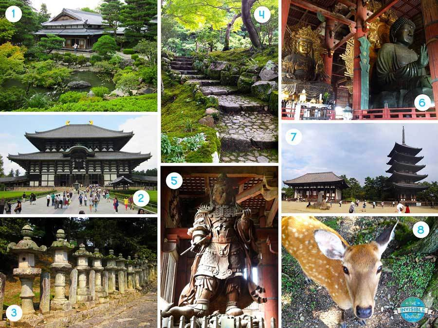 Day Trip to Nara Highlights
