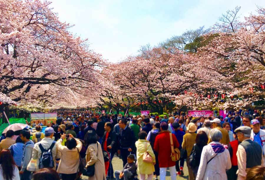 Ueno Park by Wendy, Pint Sized Gourmets