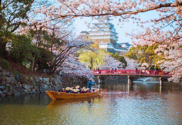 Meilleur moment pour visiter le Japon pour les fleurs de cerisier: le château de Himeji début avril