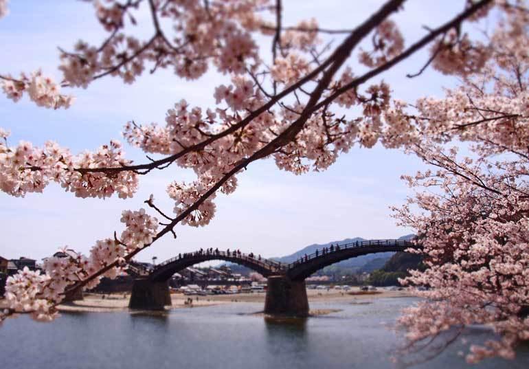 Meilleur moment pour visiter le Japon pour les cerisiers en fleurs: le pont de Kintai fin mars