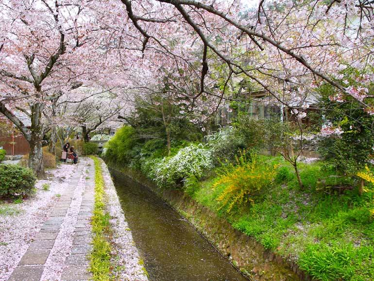 Meilleur moment pour visiter le Japon pour les fleurs de cerisier: le chemin du philosophe, Kyoto à la mi-avril