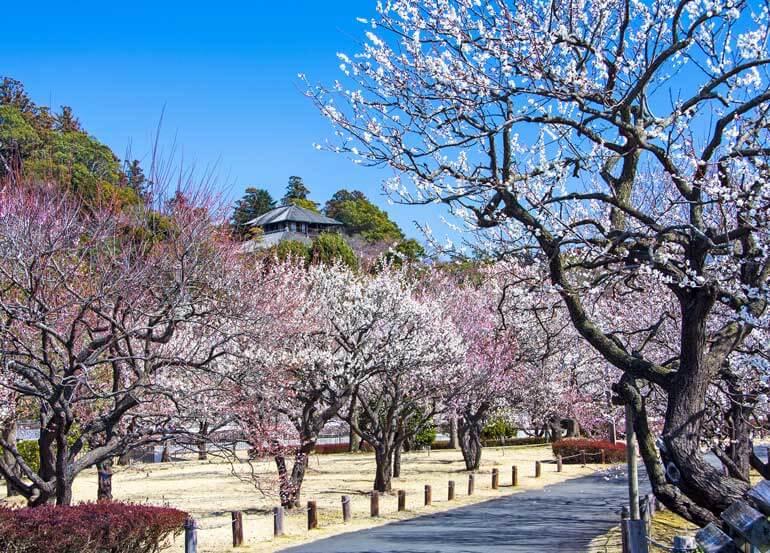 Excursions d'une journée à Kairaku-en, Mito au départ de Tokyo