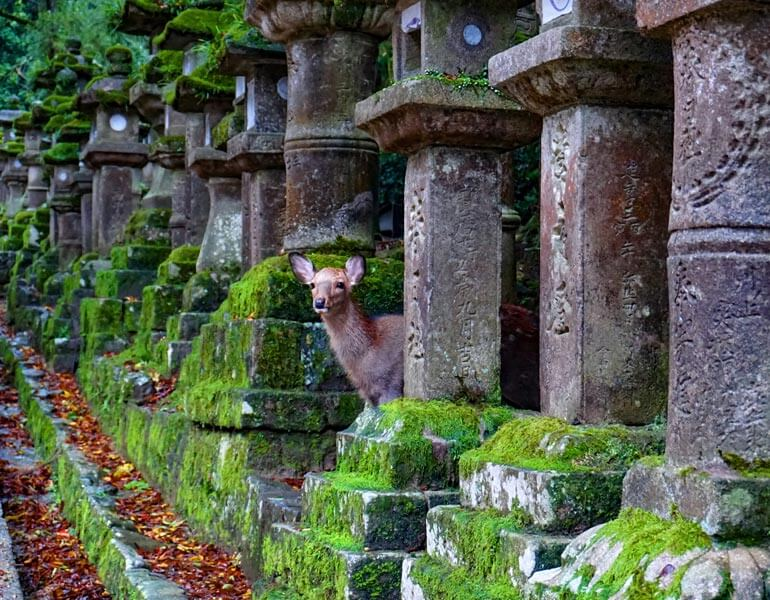 9 Inspiring & Best Day Trips from Osaka to Enrich Your Visit